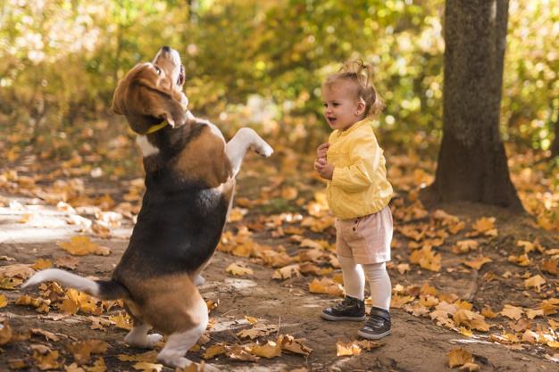 hund der leger med et lille barn