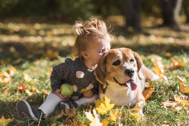 hund til børn